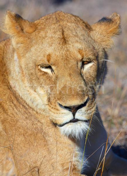 саванна ЮАР голову природы рот Сток-фото © hedrus