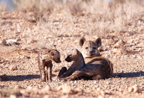 Család föld Dél-Afrika szemek anya Afrika Stock fotó © hedrus