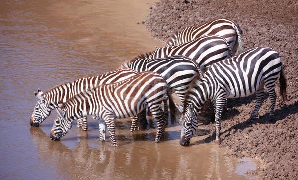 африканских питьевая вода реке природы Сток-фото © hedrus