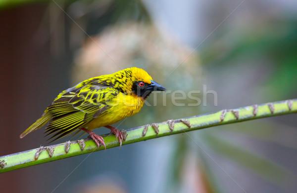 деревне сидят филиала ЮАР птица зеленый Сток-фото © hedrus