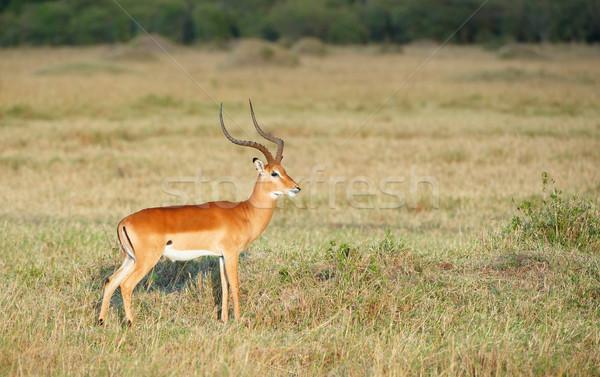 красный природы резерв ЮАР трава пейзаж Сток-фото © hedrus