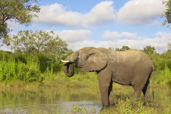 Nagy elefánt bika áll víz természet Stock fotó © hedrus