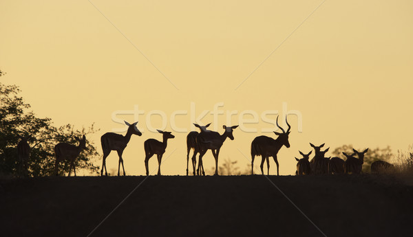 Grup kırmızı ayakta yol doğa rezerv Stok fotoğraf © hedrus