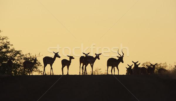 Grupo rojo pie carretera naturaleza reserva Foto stock © hedrus