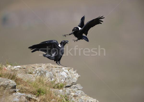 Superior colina Sudáfrica montana aves Foto stock © hedrus