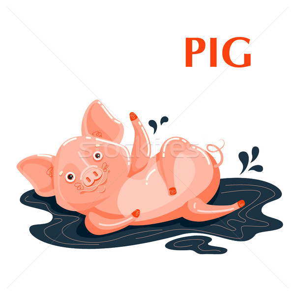 Educational flashcard pig sporting in a mud puddle Stock photo © heliburcka