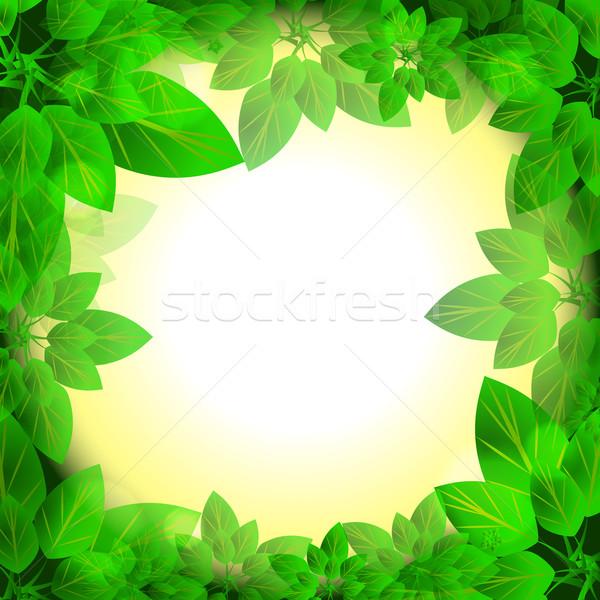 Hojas soleado marco naturaleza verde frescos Foto stock © heliburcka