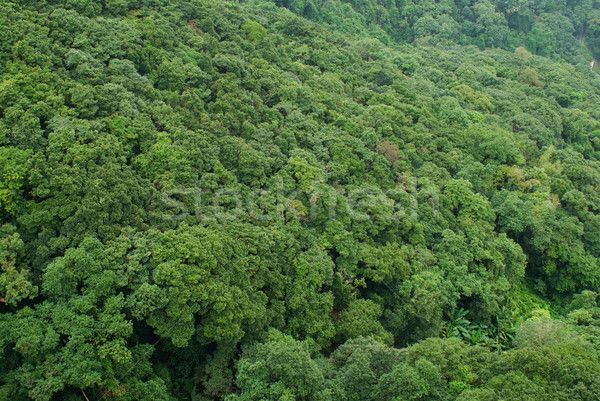 Tropikalnych Forrest full frame zielone lasu charakter Zdjęcia stock © HerrBullermann