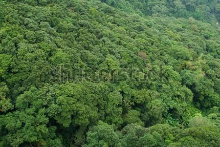 Sűrű dzsungel domboldal fa erdő természet Stock fotó © HerrBullermann