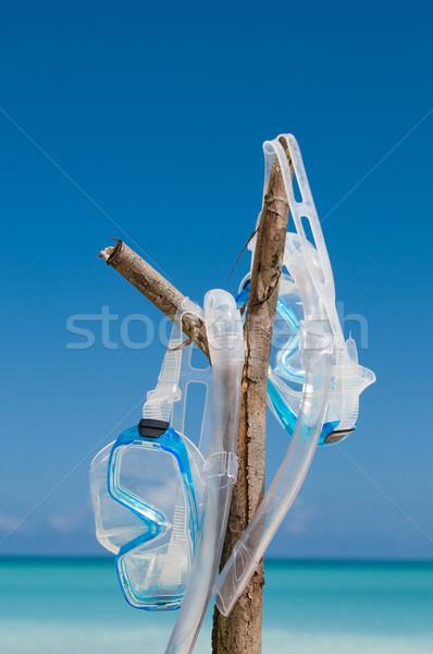 Búvárkodik maszk akasztás ág pár maszkok Stock fotó © HerrBullermann