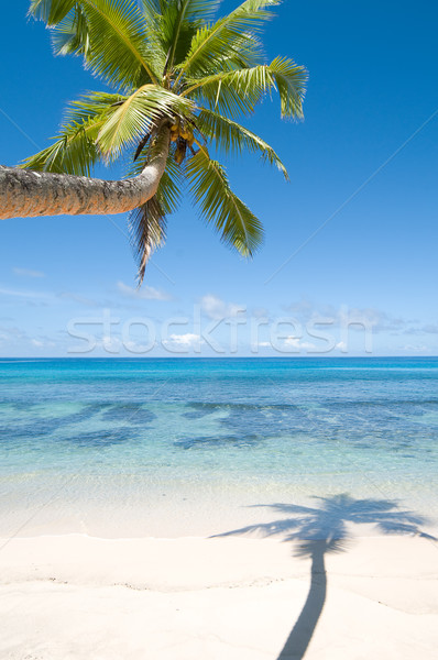 Palm tree over water Stock photo © HerrBullermann