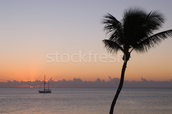 Sailing boat and Palm tree at sunset Stock photo © HerrBullermann