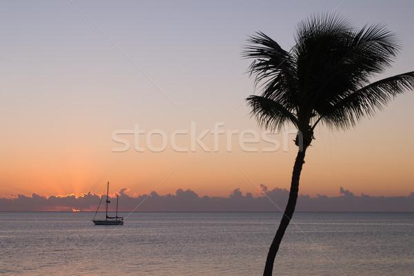 Segeln Boot Palme Sonnenuntergang Silhouette Meer Stock foto © HerrBullermann