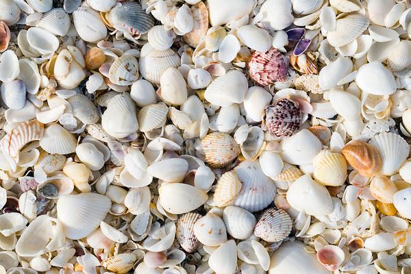 Kagylók közelkép nagy köteg tengerpart természet Stock fotó © HerrBullermann
