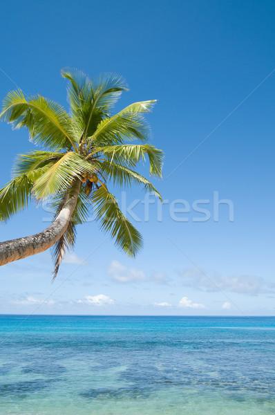 Palmboom koraalrif ondiep water zee oceaan Stockfoto © HerrBullermann