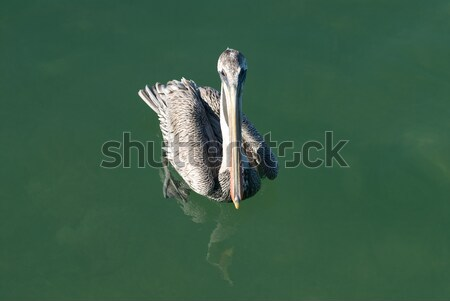 Barna úszik zöld víz tenger állat Stock fotó © HerrBullermann
