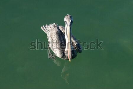 Marrom natação verde água mar animal Foto stock © HerrBullermann