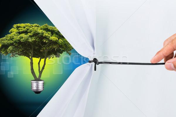Branco papel mostrar novo planta Foto stock © hin255