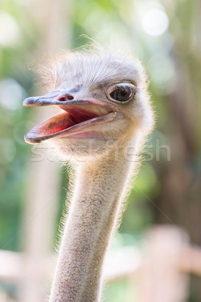 Struzzo testa guardando qualcosa zoo faccia Foto d'archivio © hin255