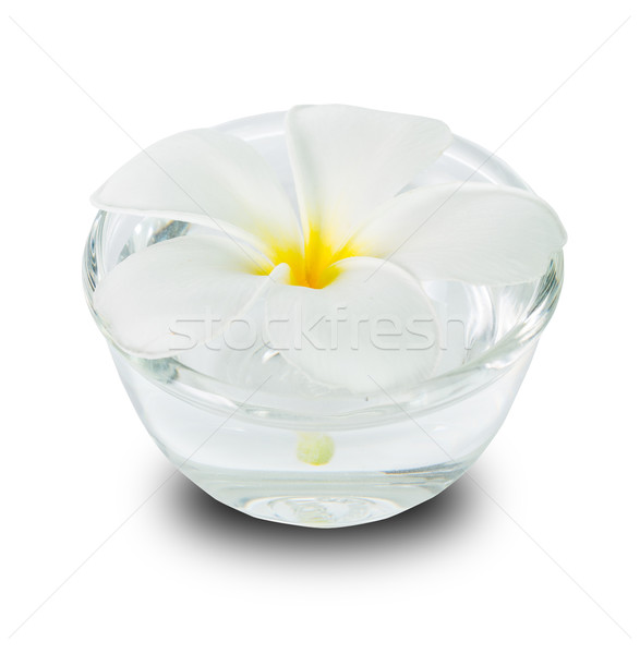 Frangipani flower Stock photo © hin255