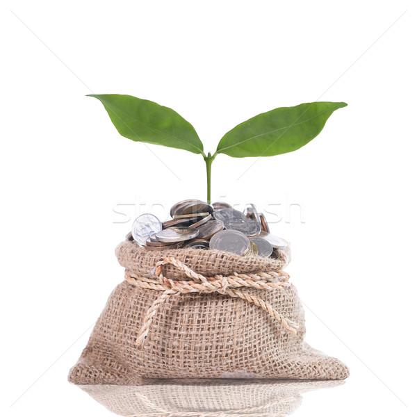 Stockfoto: Groeiend · plant · stap · munt · geld · hand