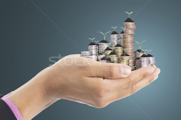 Human hand cover small growing money plant Stock photo © hin255