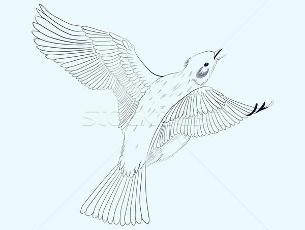 Piccolo uccello grafica cantare battenti aria Foto d'archivio © Hipatia