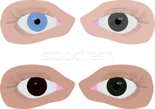 Quattro diverso colore occhi set colore Foto d'archivio © Hipatia