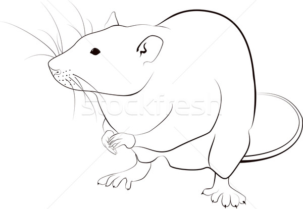 Ratto sketch nero stilizzato contorno bianco Foto d'archivio © Hipatia