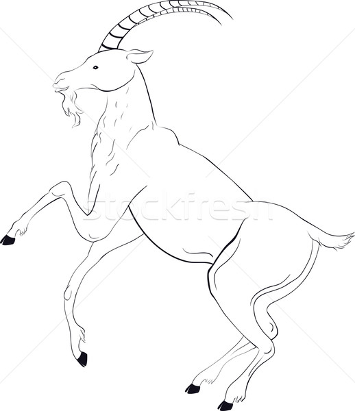 goat sketch Stock photo © Hipatia