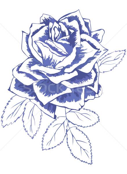 Blu rosa sketch fiore primavera Foto d'archivio © Hipatia