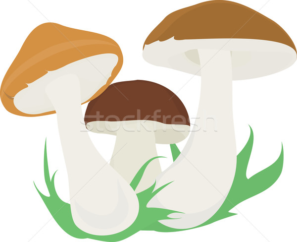 Tre funghi gruppo isolato funghi bianco Foto d'archivio © Hipatia