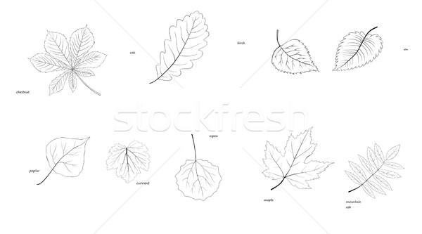 Alberi silhouette foglie specie luce Foto d'archivio © Hipatia