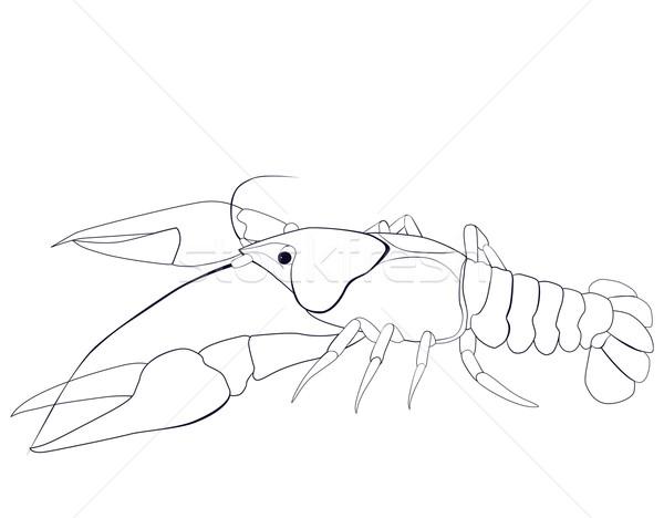 Sketch nero contorno bianco alimentare pesce Foto d'archivio © Hipatia