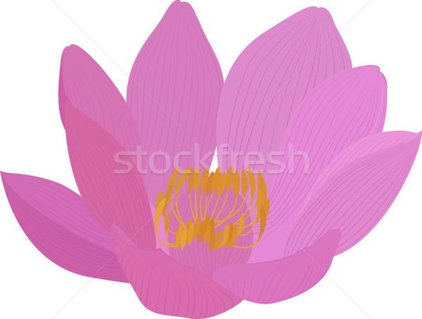 Vettore Lotus fiore rosa icona fiore isolato Foto d'archivio © Hipatia