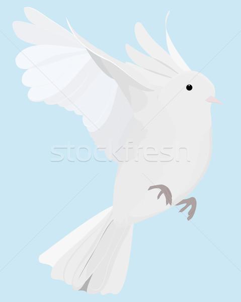 Colomba volare uno isolato bianco selvatico Foto d'archivio © Hipatia