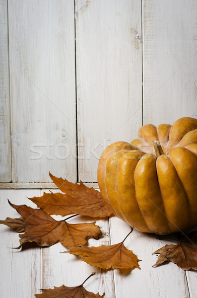 Pumkin and maple leaves Stock photo © hitdelight