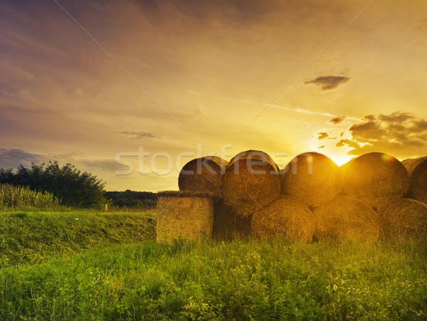 сено закат области фермы пшеницы кукурузы Сток-фото © hitdelight