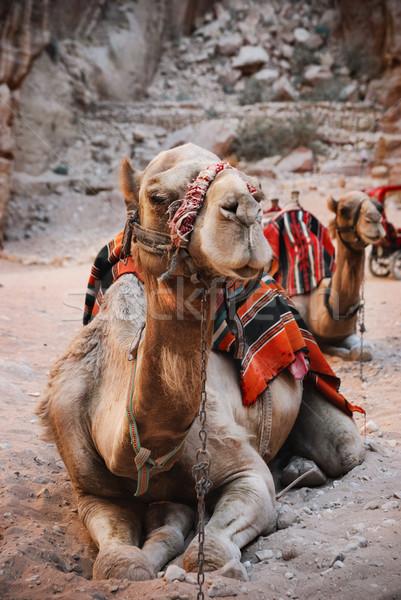 Tevék város tájkép sivatag hegy nyár Stock fotó © hitdelight