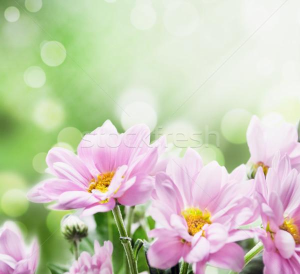 Fleurs belle rose jardin fleur Photo stock © hitdelight