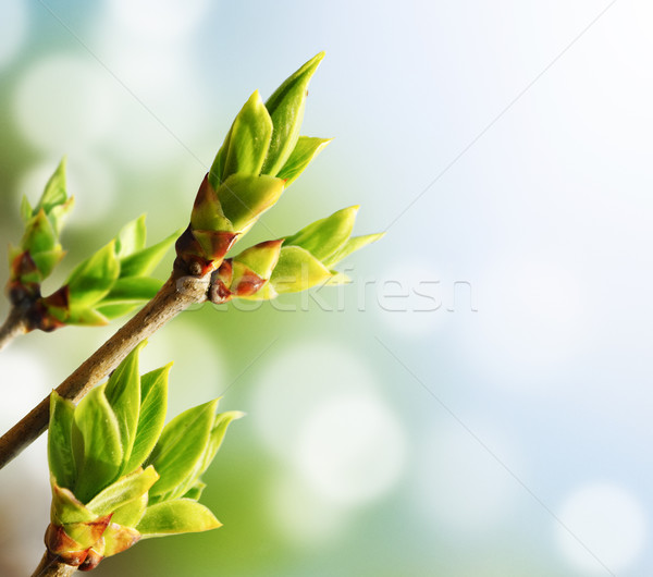 Vert bourgeon bokeh soleil design vie Photo stock © hitdelight