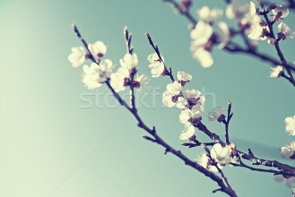 Kersenbloesem retro-stijl hemel textuur boom natuur Stockfoto © hitdelight