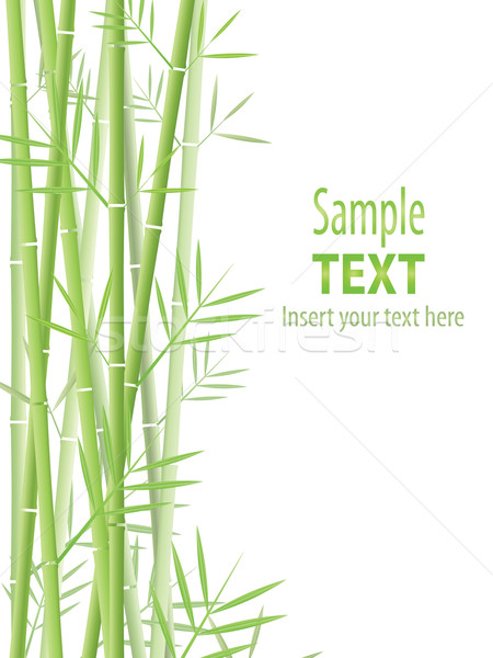 Bamboo background Stock photo © hitdelight