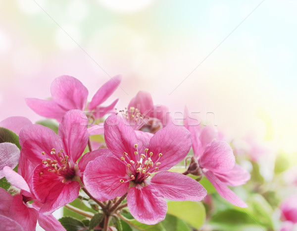Fleurs belle rose jardin fleur Photo stock © hitdelight