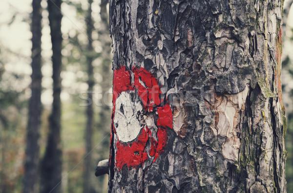 Sign on the tree Stock photo © hitdelight