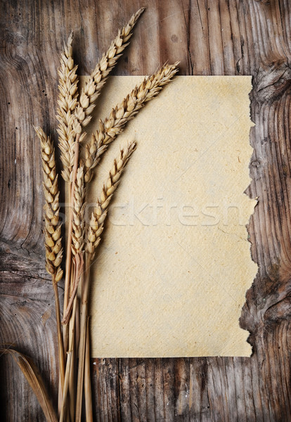 Wheat Ears Stock photo © hitdelight