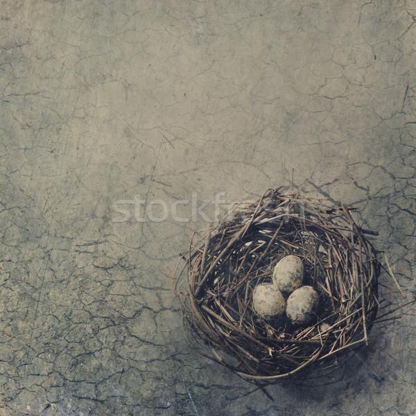鳥の巣 卵 砂漠 春 壁 ストックフォト © hitdelight