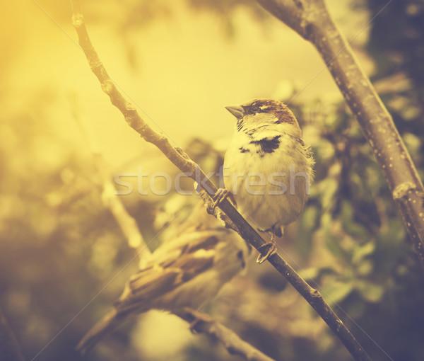 воробей дерево ретро-стиле текстуры лес природы Сток-фото © hitdelight