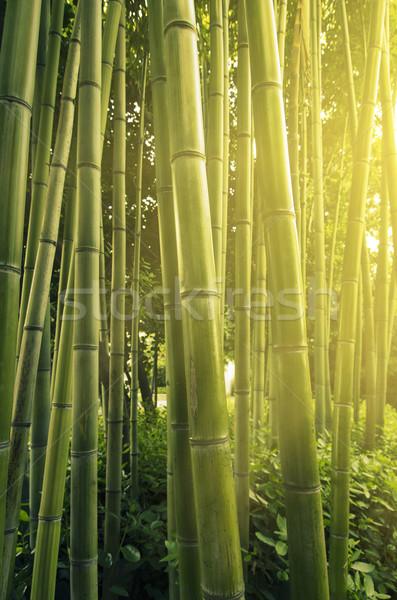 Bambù luce del sole foresta albero sfondo verde Foto d'archivio © hitdelight
