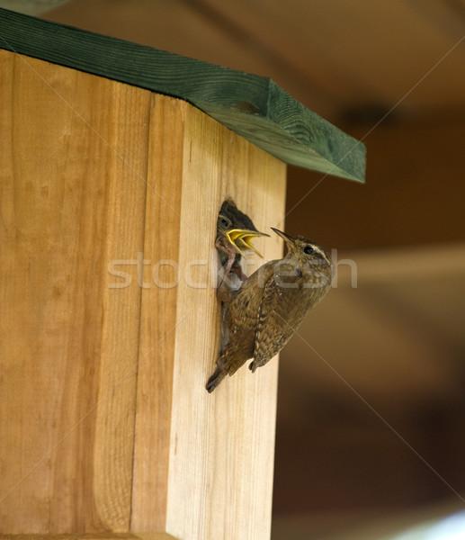 молодые гнезда окна саду птица Сток-фото © HJpix